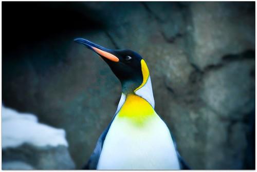 penguin profile by picniki