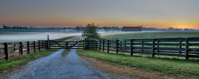 Early Morning Kentucky Horse Farm