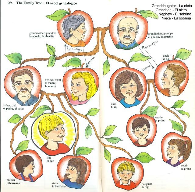Arbol genealogico en ingls con dibujos  Imagui