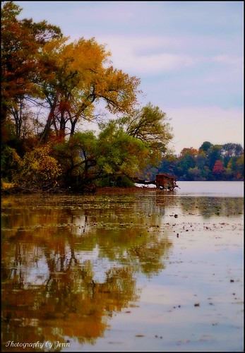 autumn trees colour reflection nature water nikon d70s lakeontario hfg jordanharbour cans2s