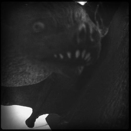 Views of Halloween bats and ghosts by Juli Kearns (Idyllopus)