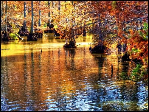 sunlight lake fall nature water reflections swamp noxubeerefuge blufflake fantasticnature absolutelyperrrfect