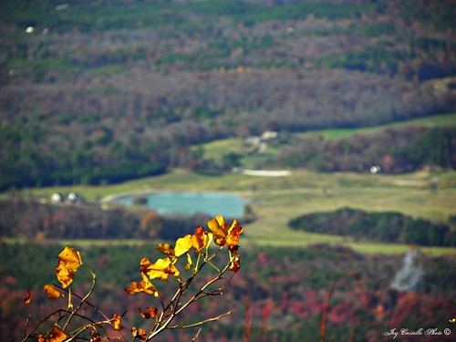 trees mountains leaves georgia fortmountain overlooks murraycounty nov112011
