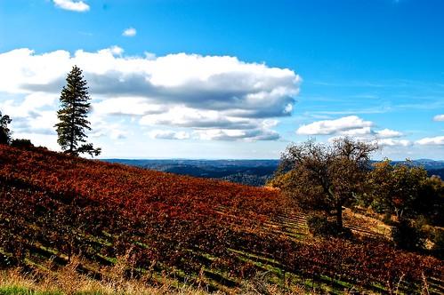 autumn colors clouds harvest vineyards after eldoradocounty mtaukum