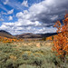 Autumn, Sage and Clouds by Matt Grans Photography