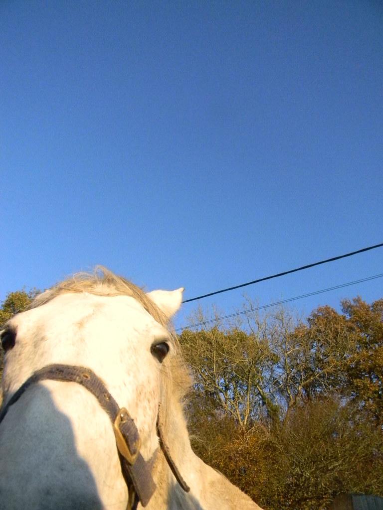 Friendly horse Buxted Circular
