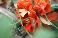 fall flowers 116
