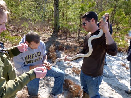 Pine Snake Census