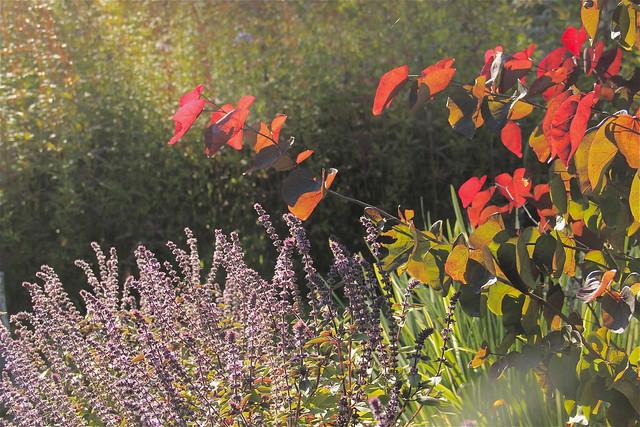 ... Collection Galleries World Map App Garden Camera Finder Flickr Blog