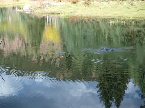 creek colorado beaver skagway beavercreekwilderness camfirephotos skaguaypowerplant skaugay