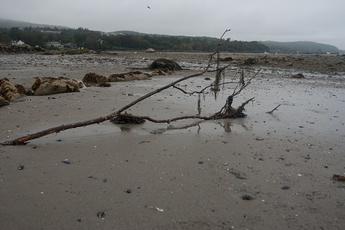 Bar Harbor at Low Tide