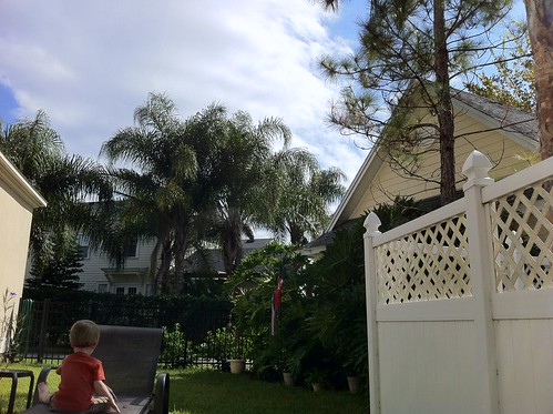 Our tropical backyard