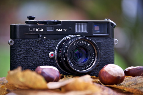Leica M4-2 in autumn