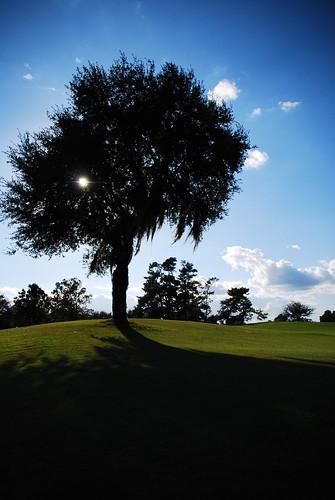 blue shadow sky tree green nature florida celebration growth lovely
