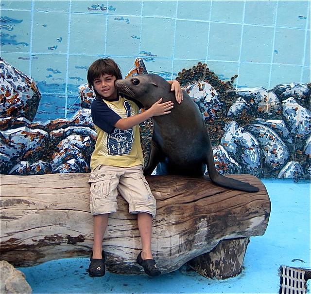 sea lion love in national aquarium in havana cuba
