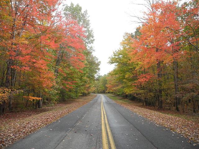 Autumn drive through the park