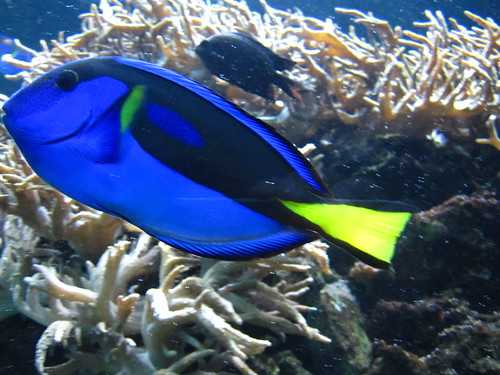 Bright Blue Fish