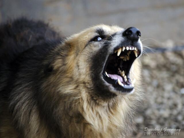 Use Barking Dog Seldom Bite In A Sentence