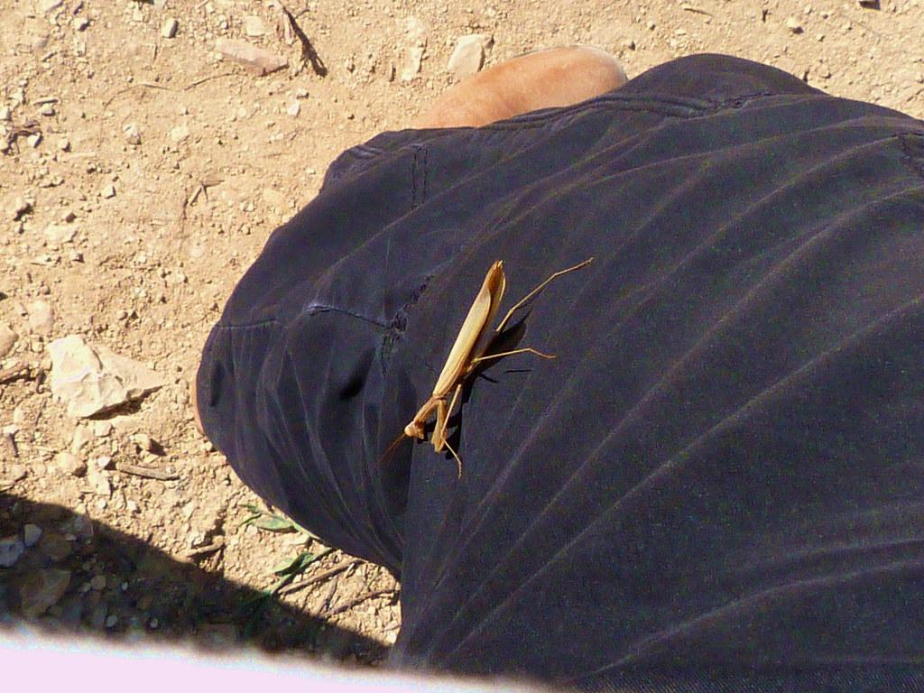 11-11-2011-lifta-praying-mantis-on-my-leg