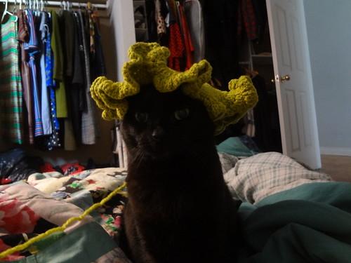 Hyperbolic Cat Wig