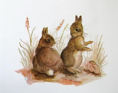 Tasha Tudor bunnies