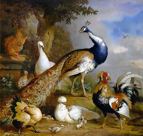 PeacockPeahen