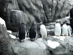 20120325 calgary zoo - 33