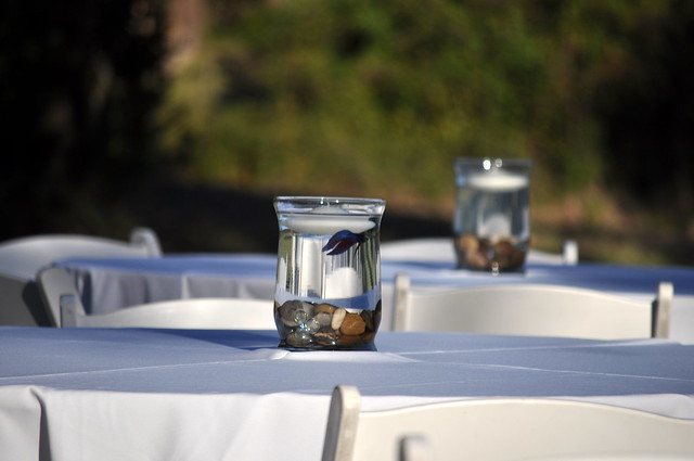 Taniesha\'s blog: They had beta fish in their centerpieces and the ...