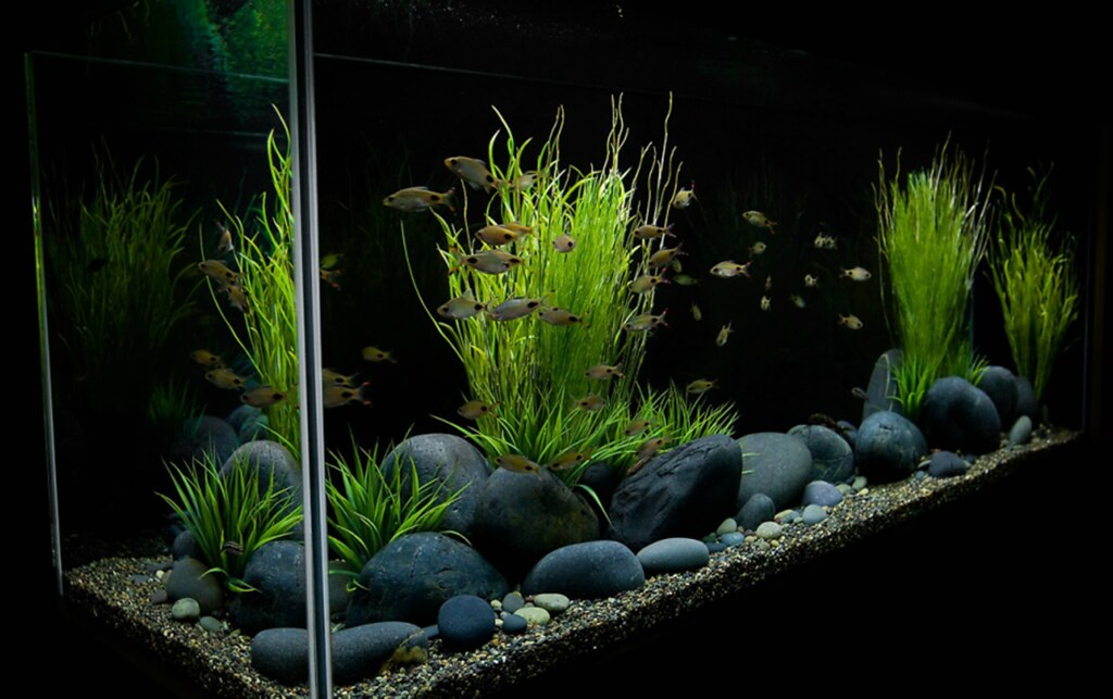 Large river stones mexican rive pebbles the planted tank for Landscaping rocks for aquarium