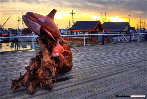 Steveston Whale