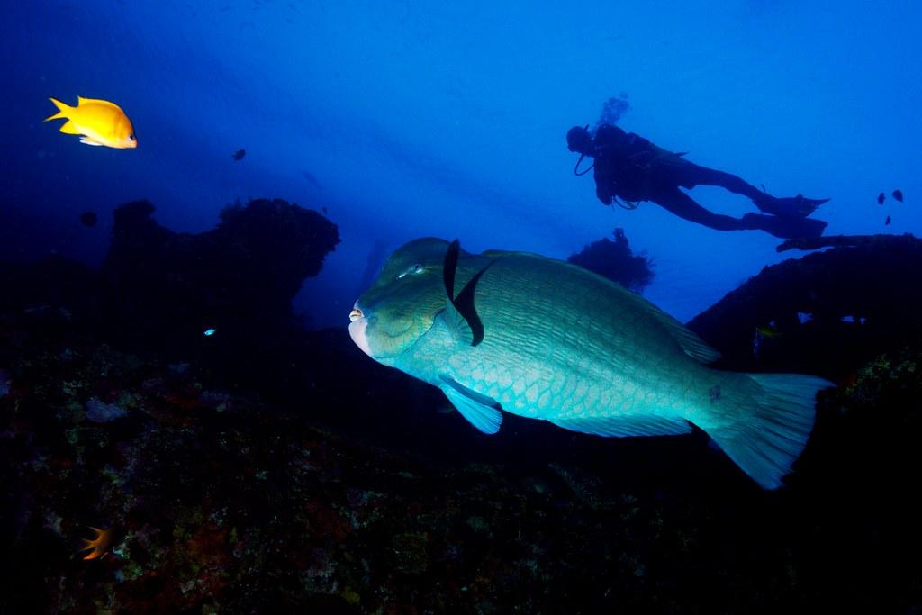 Viaje de buceo a Bali