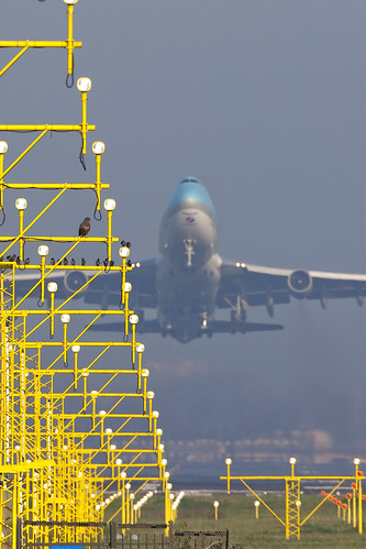 Birds & Korean air cargo 747