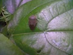 TASOK Bug Hunt 11.11.11