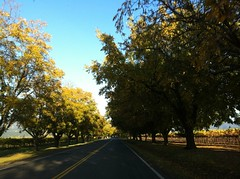 Just one of hundreds of scenic roads in Napa Valley