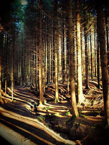 Glenbarrow Woods