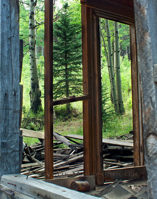 The bare framing of an abandoned mountain cabin creates a triptych of green aspens and pine.  Northern Colorado Rocky Mountains