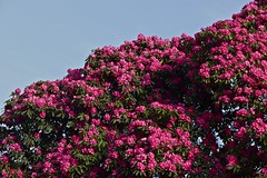 Kew Gardens a springtime walk