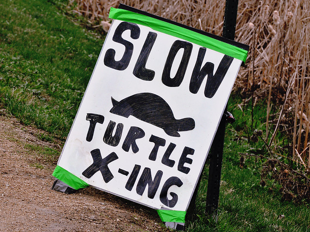 Slow Turtle Crossing