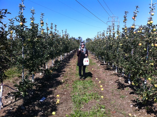 Upstate at a apple farm! Magical!