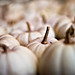 mini white pumpkins by SuperDewa