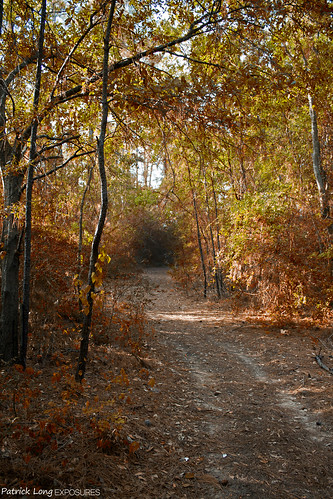 autumn brown color tree green fall leaves bike contrast forest canon dark 350d rebel early moss texas dof ride hole path trail change bikeride abyss darkhole rabbithole patricklong patricklongexposures plexposures