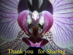Orchid, Award 002