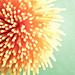 Spaghetti Flower by PatCoriPix
