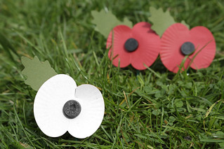 Red and White Remembrance Poppies