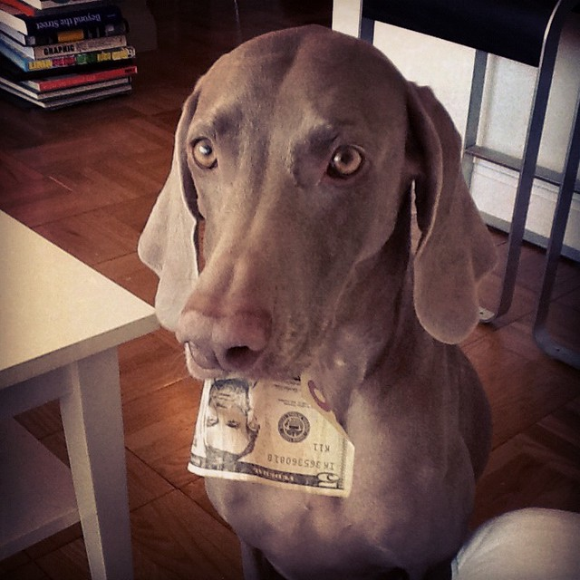 Madison trying to pay me for treats