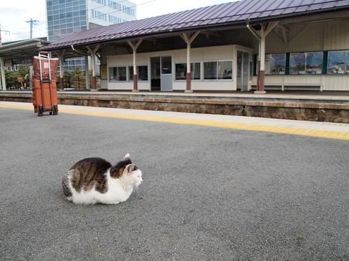 電車はまだかにゃー