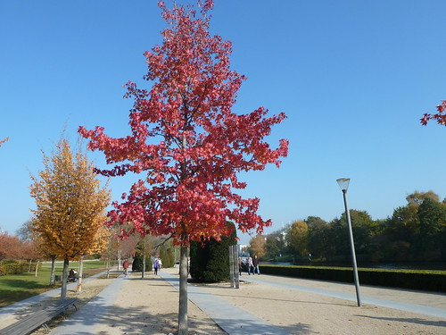 Herbstfarben / P1030349