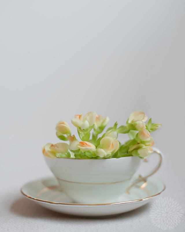 tea-1-web