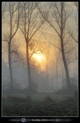 trees mist fog sunrise canon belgium belgique belgië erlend muizen 24105mm 60d erroba robaye