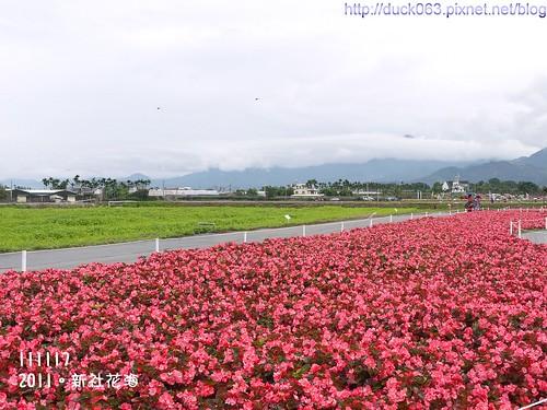 P1130322花海2
